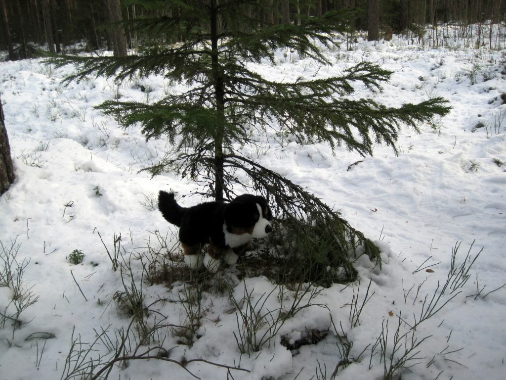 Difi is a bit anxious and finally finds a suitable tree to relieve itself.