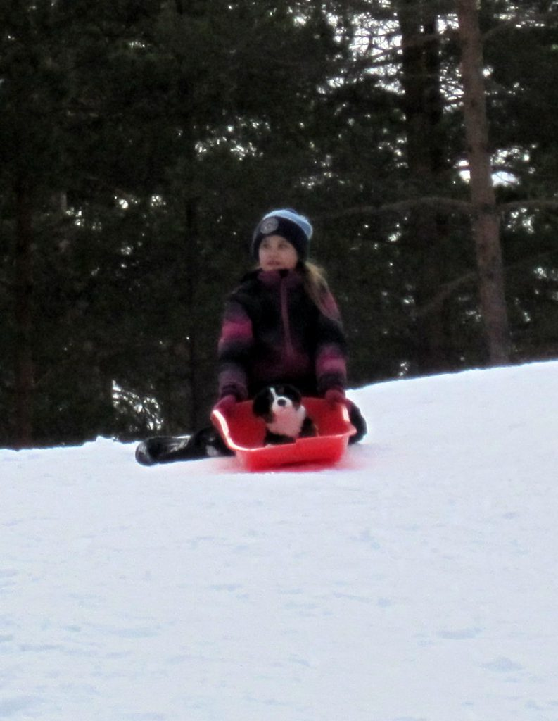 Difi sits on a sled